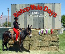 View the latest Bishop Mule Days Pictures